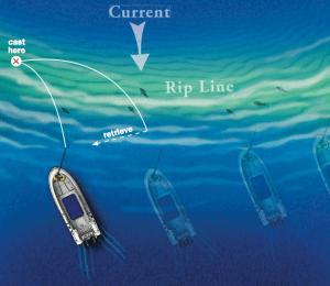 Rip fishing guide