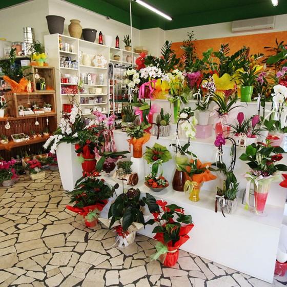 Negozio di giardinaggio a Bergamo  Mazzola