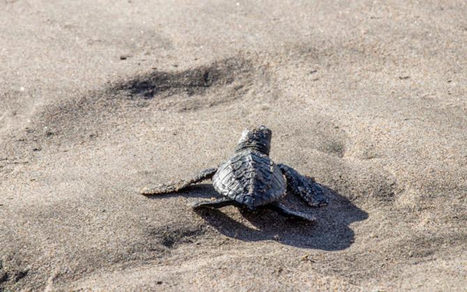 Volunteering Schildkrötenprojekt mb care