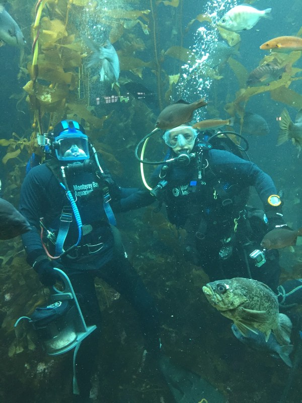 Scuba Diving In Kelp Forest Exhibit Mbari