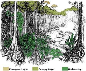 amazon rainforest layers diagram led circuit tropical
