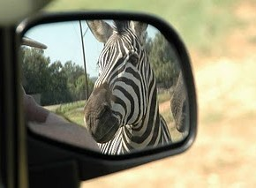 Objects in the Rear View Mirror Are Closer Than They Appear