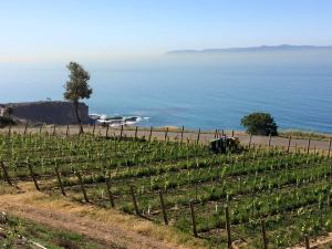 Catalina View Gardens Vineyards and Ocean View