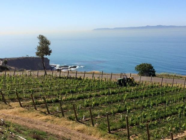Ocean View Catalina View Gardens | Event Catered by Made By Meg | preferred venues