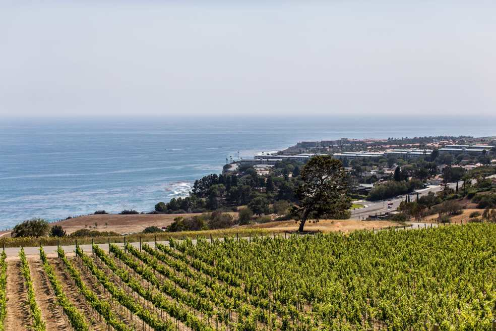 Catalina View Gardens Vineyards and Ocean View | Catered by Made By Meg