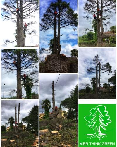 Abbattimento in tree climbing