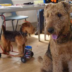 Sofa By Fancy Star Furniture Table The Airedale Terrier