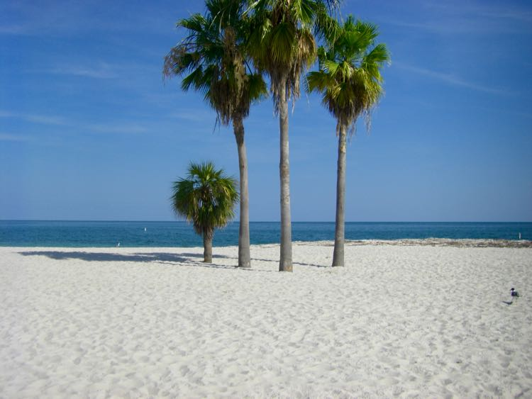 palm trees on sandy Florida Keys beach