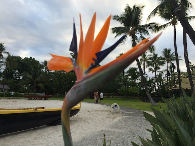 bird of paradise and palm trees in Hawaii