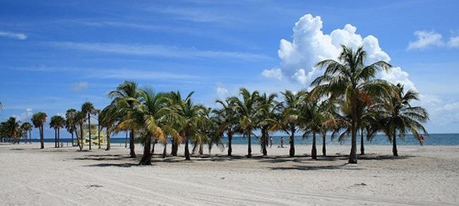 palm trees and clean sand at Crandon Park Beach