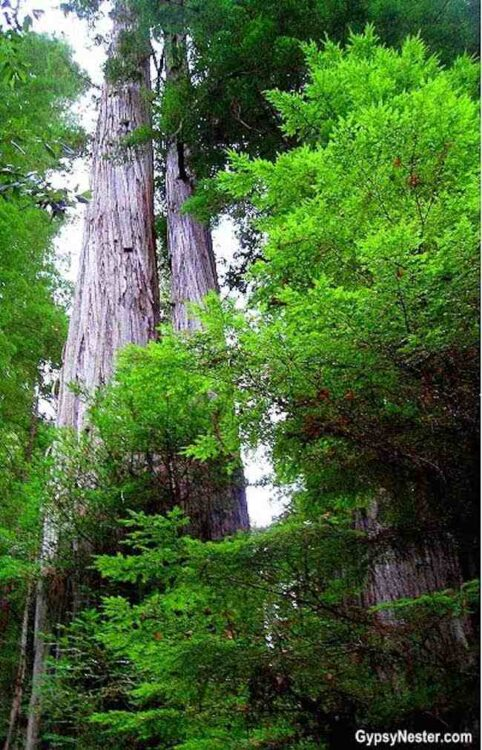 California: Avenue of the Giants