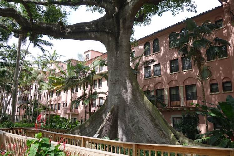 giant kapok tree at Boca Resort is one of hidden gems in South Florida