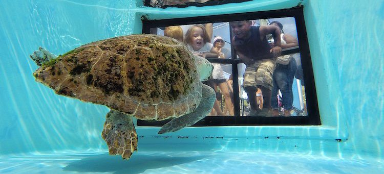 Loggerhead Marinelife Center - Photo by Greg Lovett