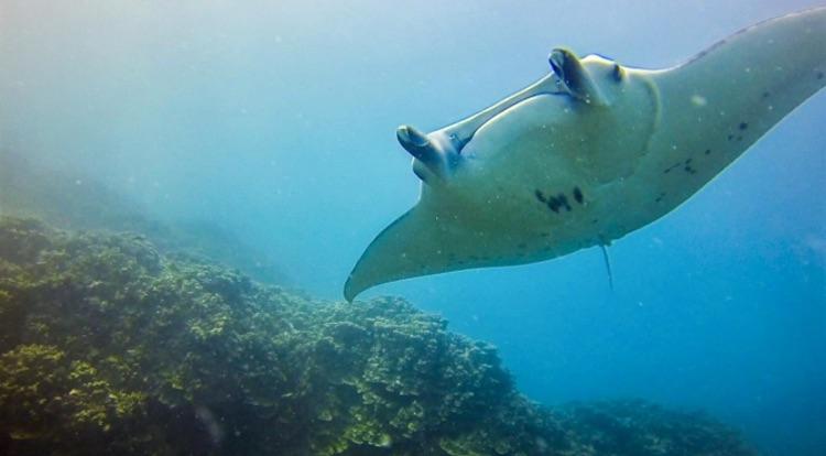 Maldives Adventure Activities. Article on McCool Travel. Photo by Ashley Bustillos