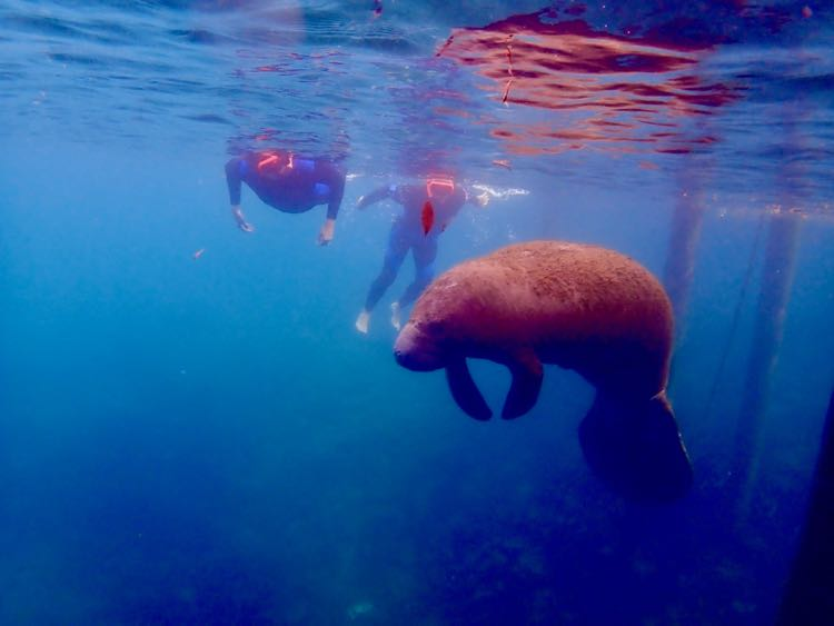 Fun Things to Do in Crystal River FL: Manatee Tours and More