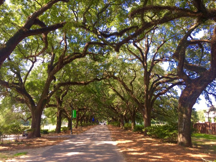 Avenue of the Oaks at Spring Hill College