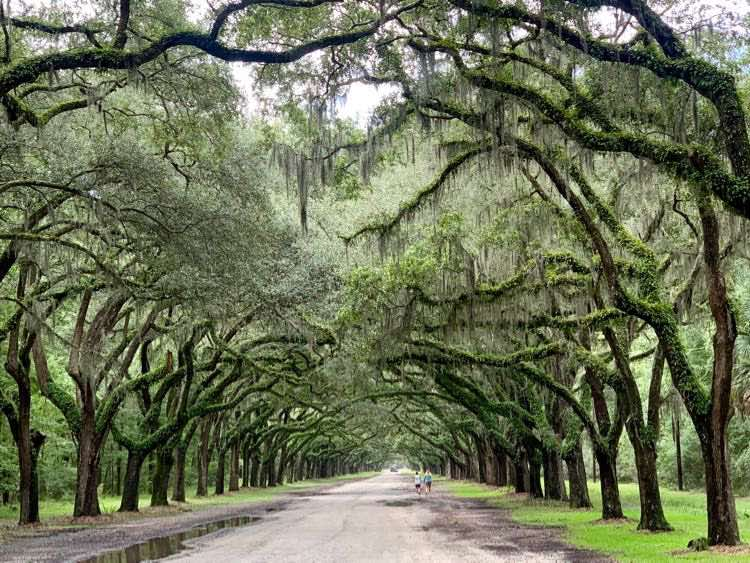 beautiful tree alley of Wormsloe Historic Site