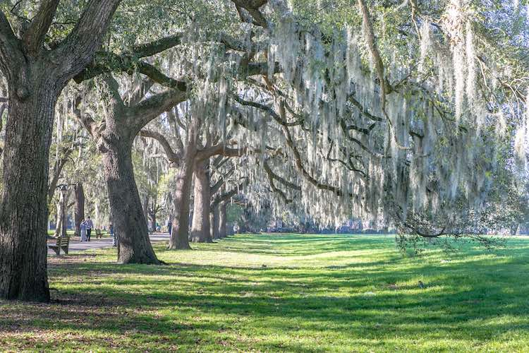 moss and oak trees at Forsyth Park