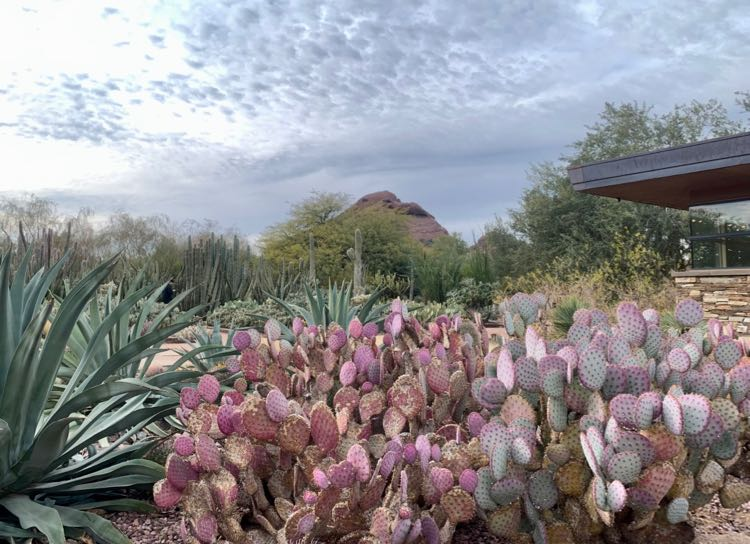 Colorful cacti at the Desert Botanical Garden, Phoenix AZ