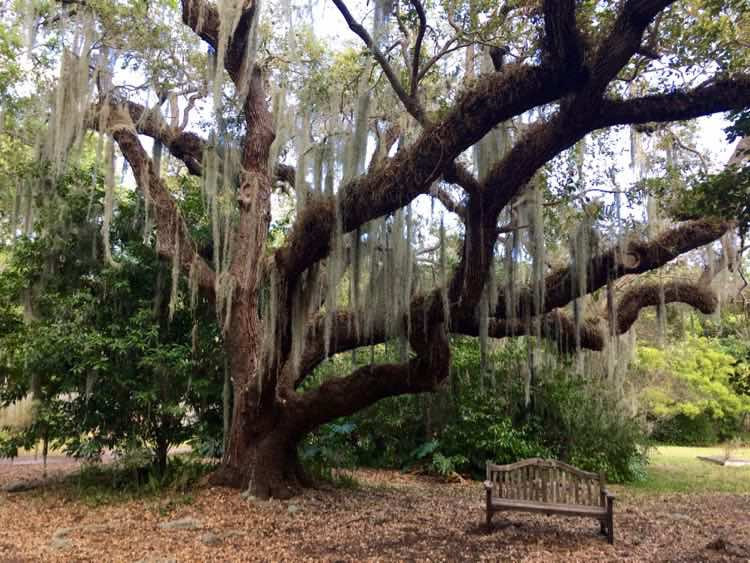 bench under Southern oak tree on this Miami Scenic Drive