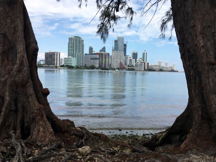 view of downtown Miami through trees from Rickenbacker Causeway