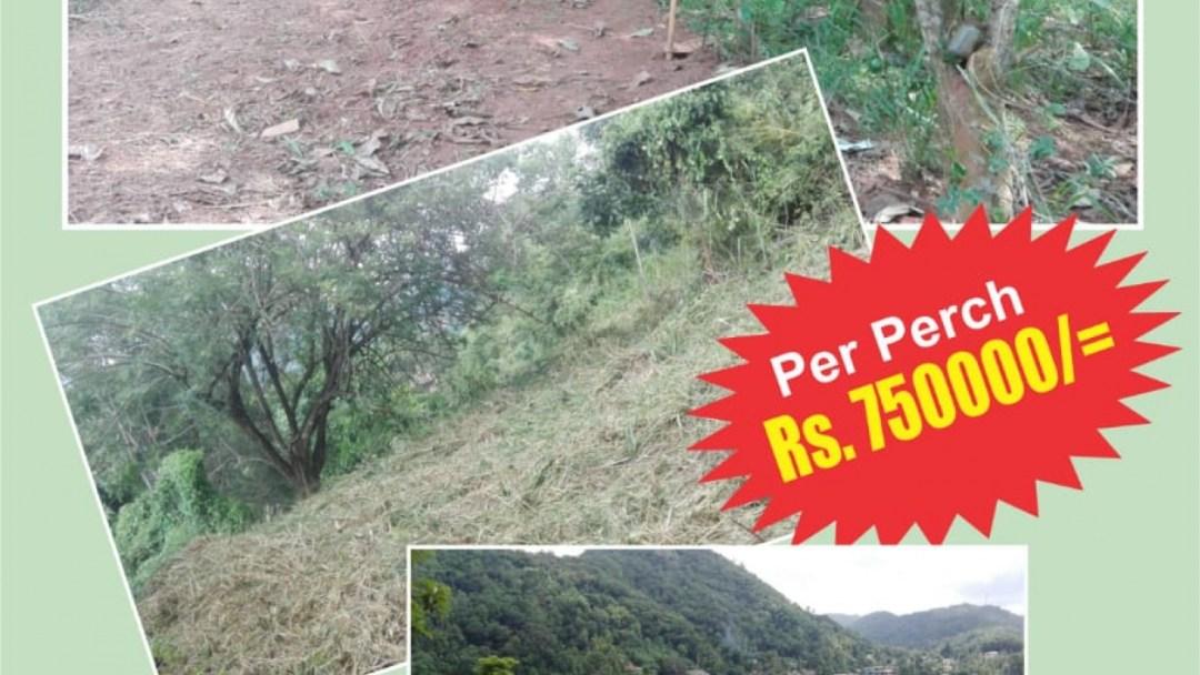 Upul Mawatha, Peradeniya, Kandy, ,Land,For sale,Upul Mawatha,1094