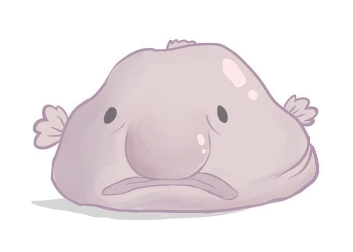 Blobfish image