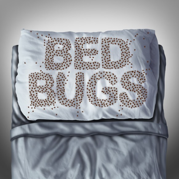 Bed Bugs in Toronto