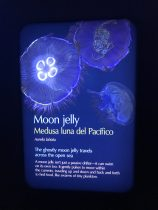 Moon Jelly Sign
