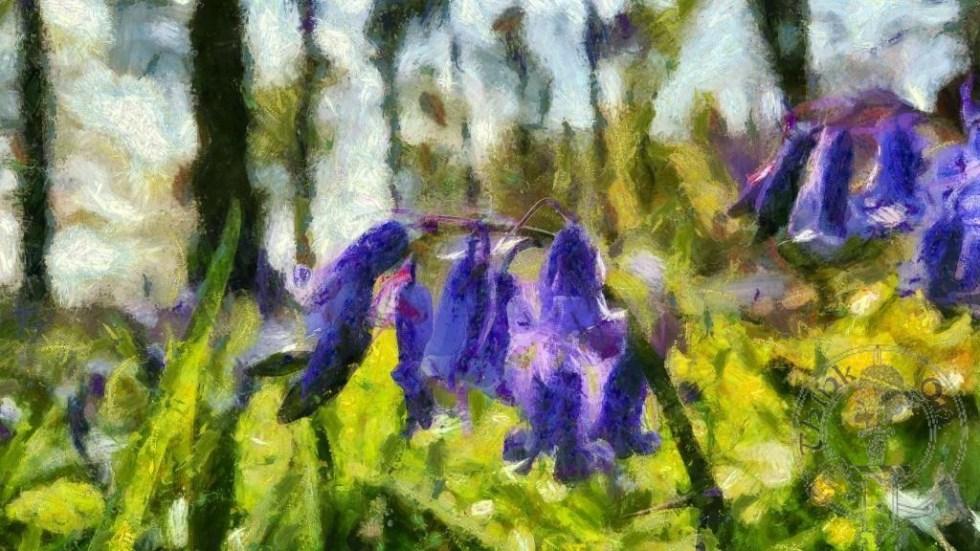 Bluebells Monet Style