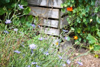 Compost & flowers