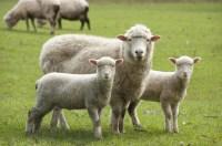 McPhee Bros Exports  Australian Meat Exporters of beef ...