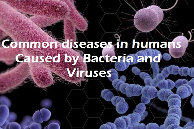 common diseases in humans caused by bacteria and viruses