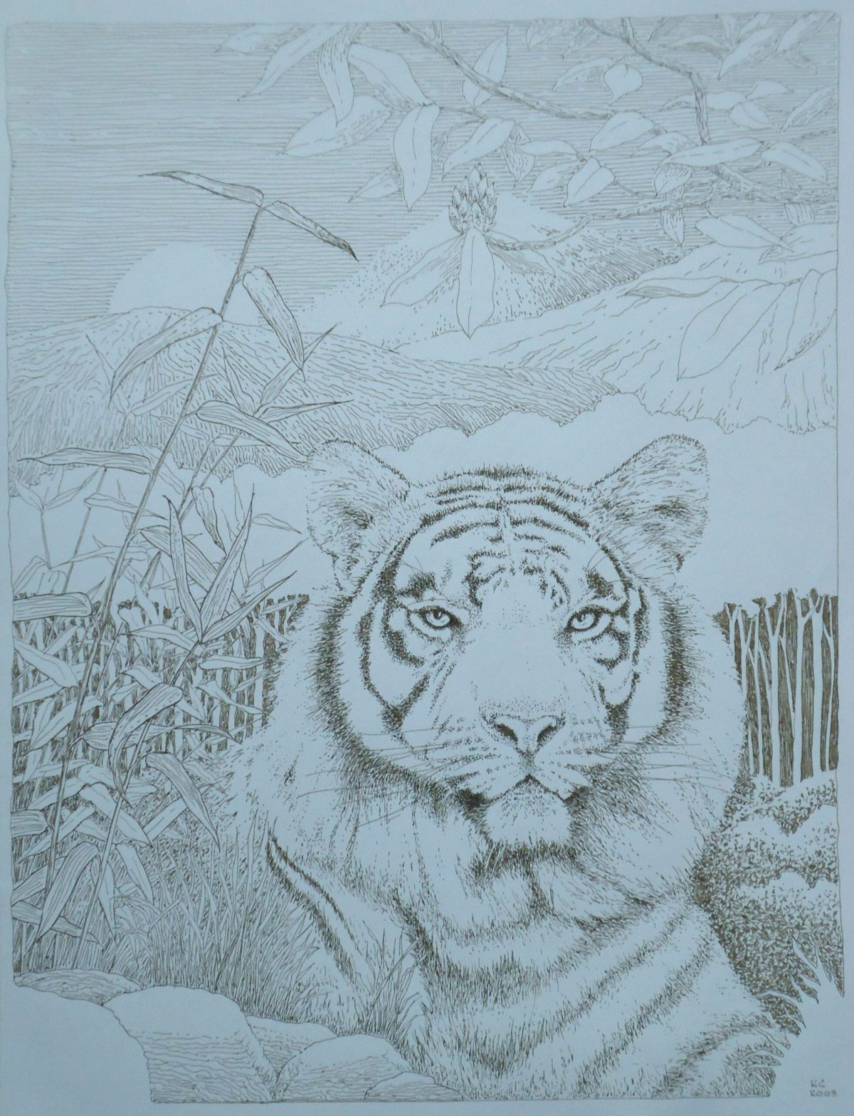 A pen and ink drawing of a tiger in a scenic setting by Keith Cains.
