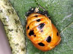 Kindergarten's Mystery Bug