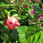 Hillwood Estates garden