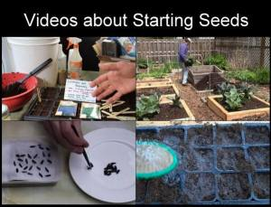seed-starting_video