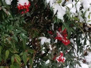 burning-bush-and-snow