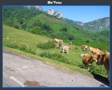vacas en el anglieru