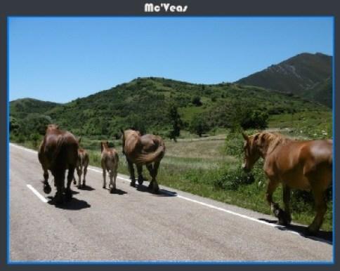 caballos en la carretera