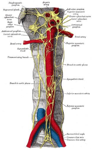 Sacral And Pelvic Nerves Splanchnic