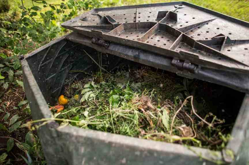 Plastic composter in a garden - filled with decaying organic mat