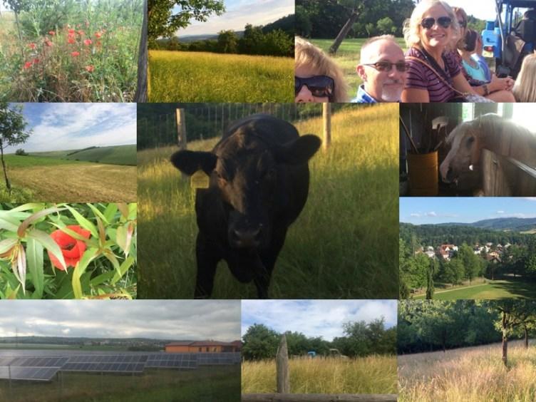 Holy Farm