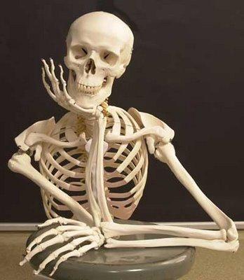 Esqueleto humano - Como é formado?