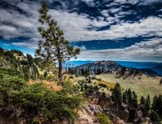Ken Small Lone Tree Lassen Volcanic National Park