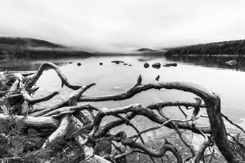 Black and white image of tangled roots on the shore of Eagle Lake with fog lifting from the mountains of Acadia National Park, Mount Desert Island, Maine.