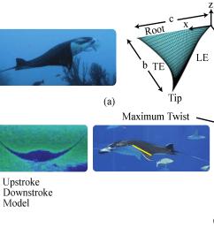 manta ray swim diagram wiring diagrams data manta ray swim diagram [ 3403 x 1764 Pixel ]