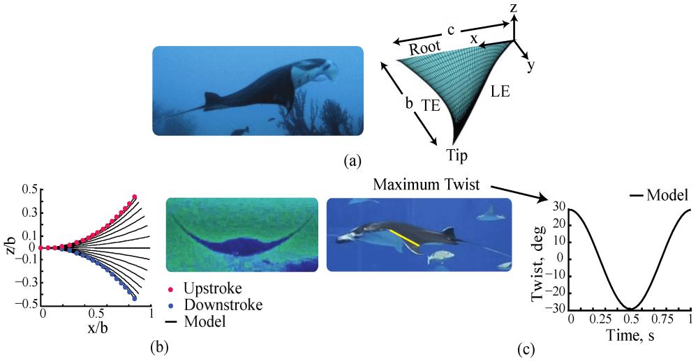 medium resolution of manta ray swim diagram wiring diagrams data manta ray swim diagram