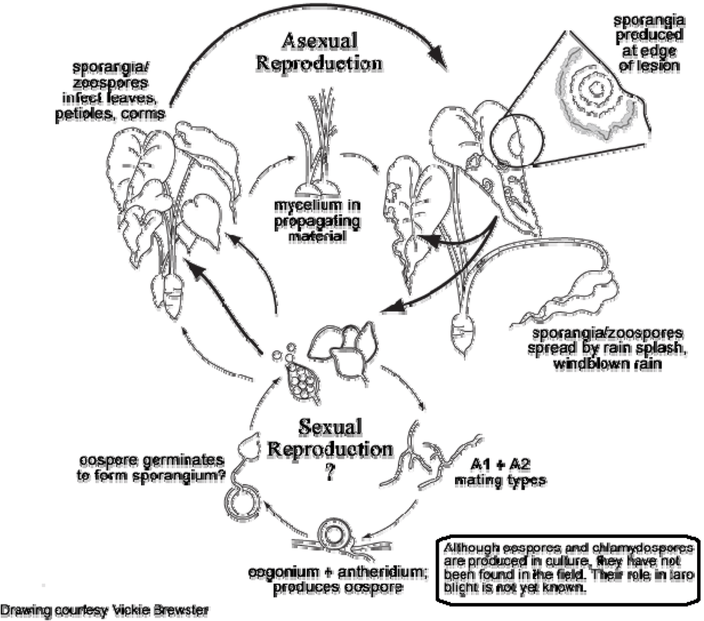 panda life cycle diagram 1991 gmc sierra tail light wiring elephant only pictures to pin on