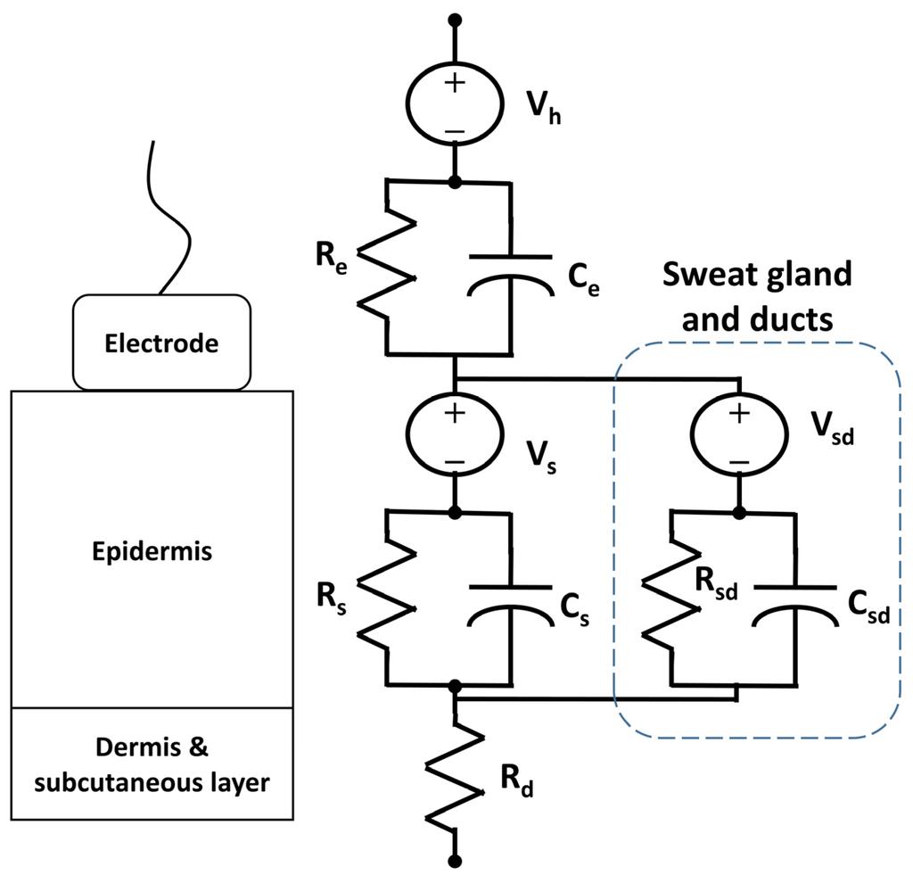 Skin Layers Diagram